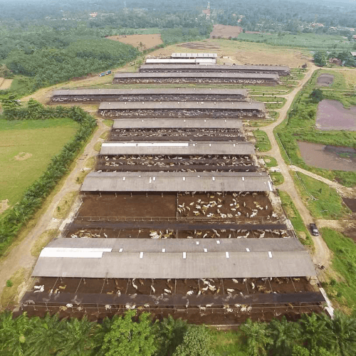Elders Indonesia Feedlot